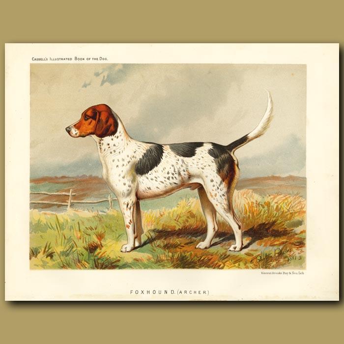 Antique print. Foxhound