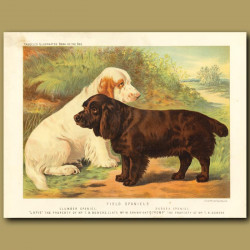 Field Spaniels (Clumber and Sussex)