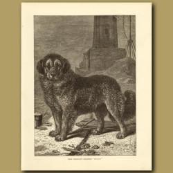 Herr Friedrich's Berghund 'Moulon'