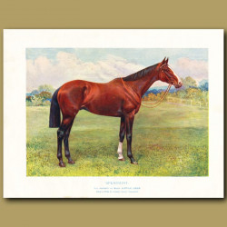 The Horse 'Spearmint' Winner Of The 1906 Derby