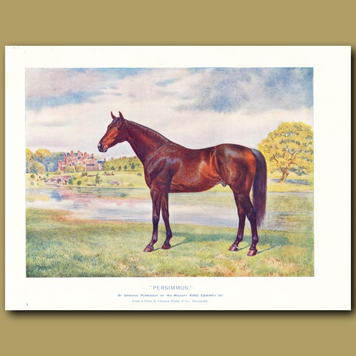 Antique print. The Horse 'Persimmon'
