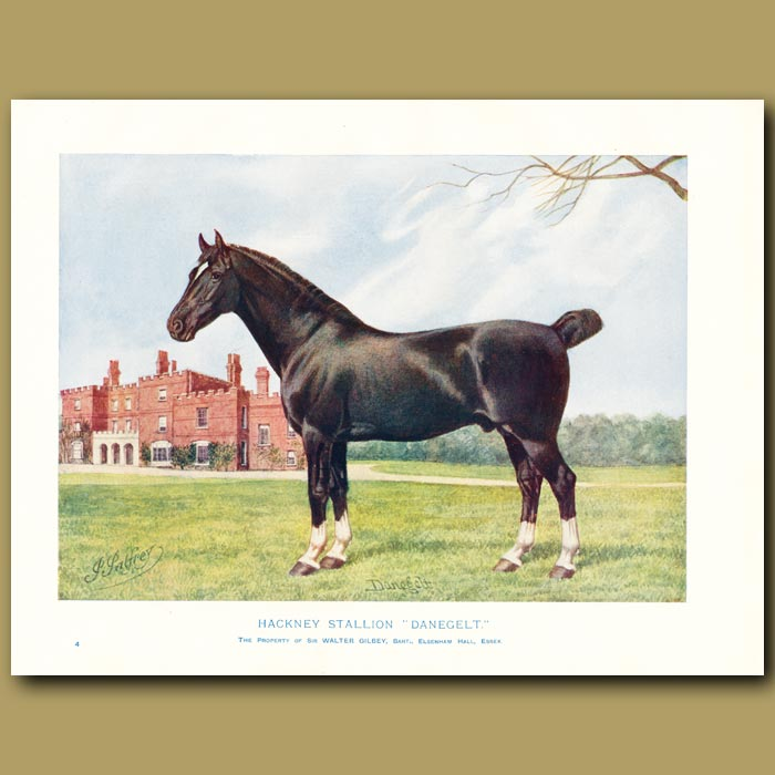 Antique print. Hackney Stallion, Danegelt