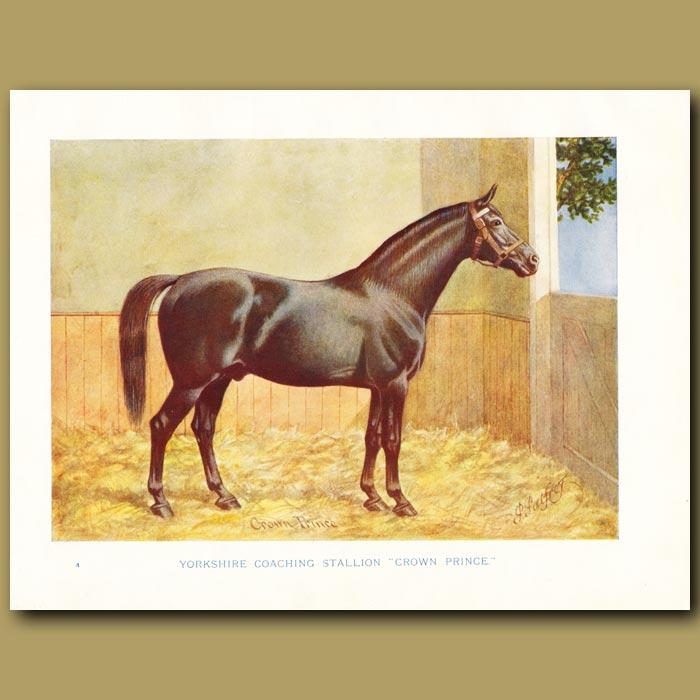 Antique print. Yorkshire Coaching Stallion, 'Crown Prince'