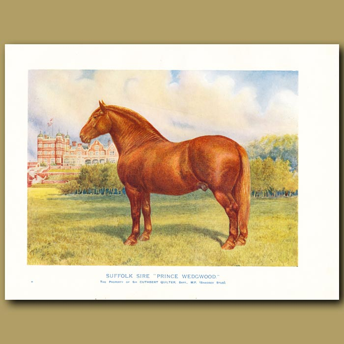Antique print. The Suffolk Sire Horse, 'Prince Wedgwood'
