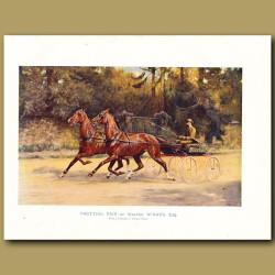 Horse Trotting Pair of Walter Winans, Esq