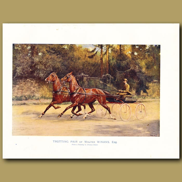 Antique print. Horse Trotting Pair of Walter Winans, Esq