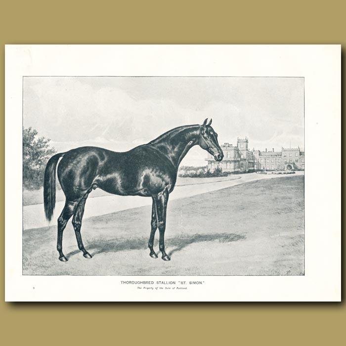 Antique print. Thoroughbred Stallion, 'St.Simon'
