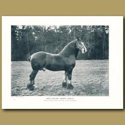 Shire Stallion, Buscot Harold