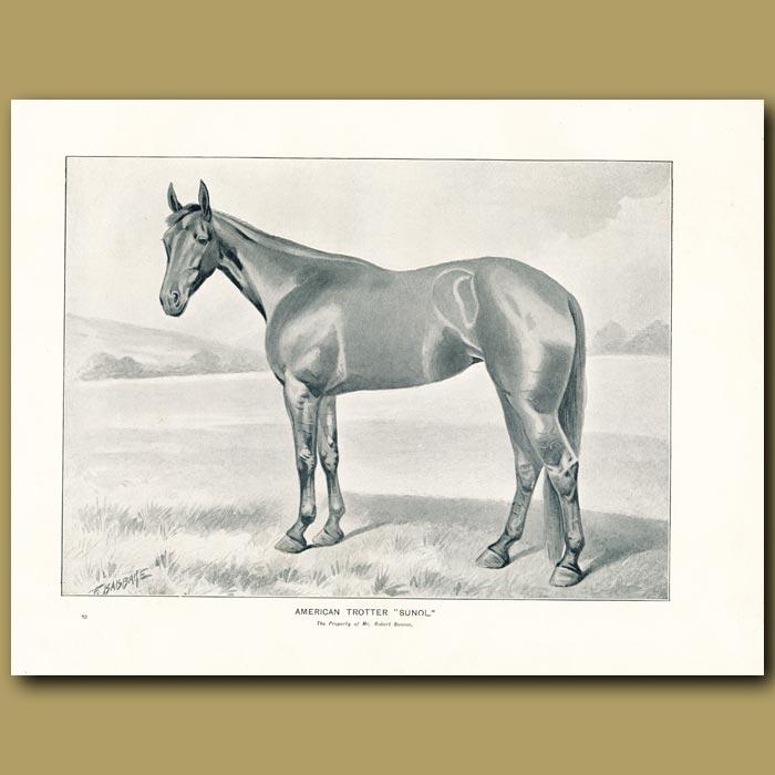 Antique print. American Trotter Horse, 'Sunol'