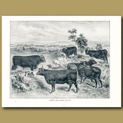 Sussex and Devon Cattle