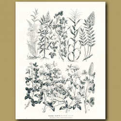 Forage Plants
