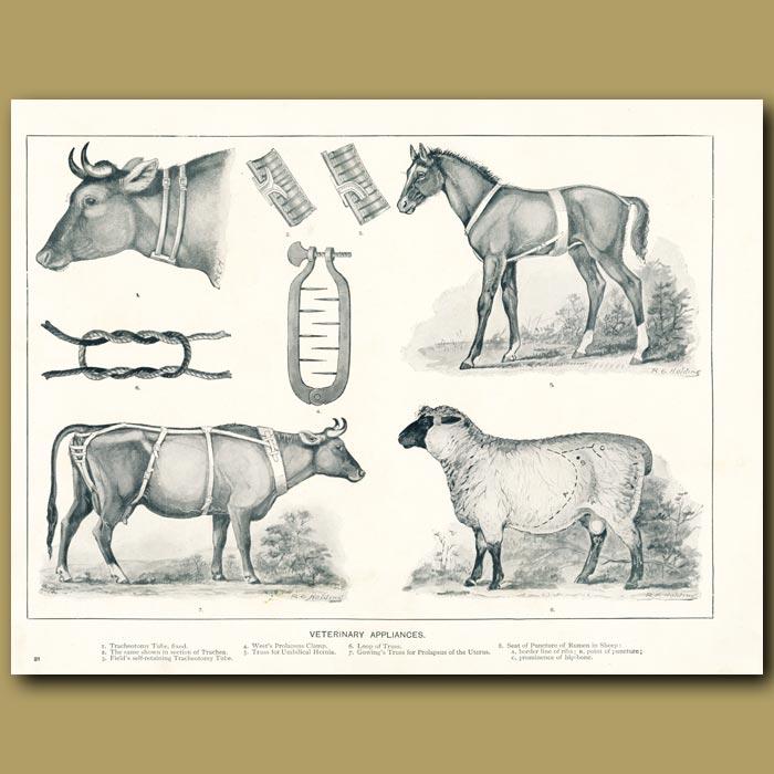 Antique print. Veterinary appliances