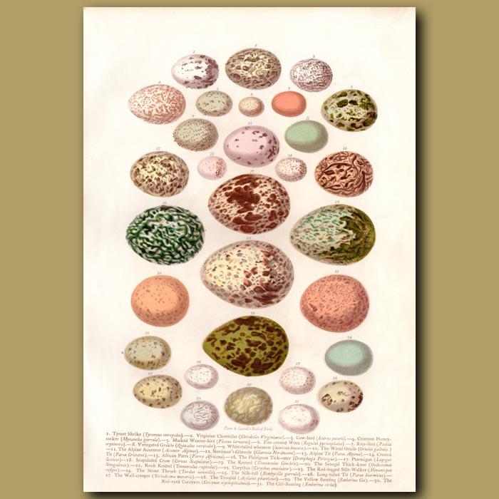 Antique print. Eggs