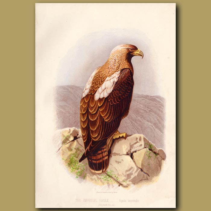 Antique print. The Imperial Eagle