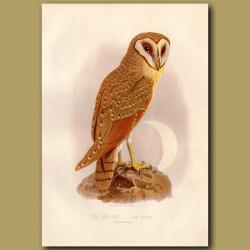 The Java Owl