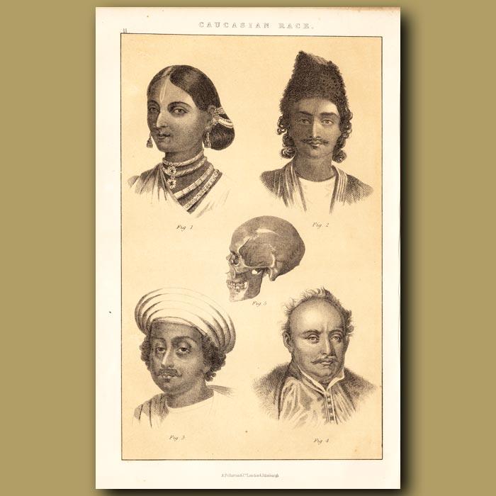 Antique print. Caucasian Race – Indian Branch, Circassian Branch, Indo-Geramangue Branch and Sclavoman Branch