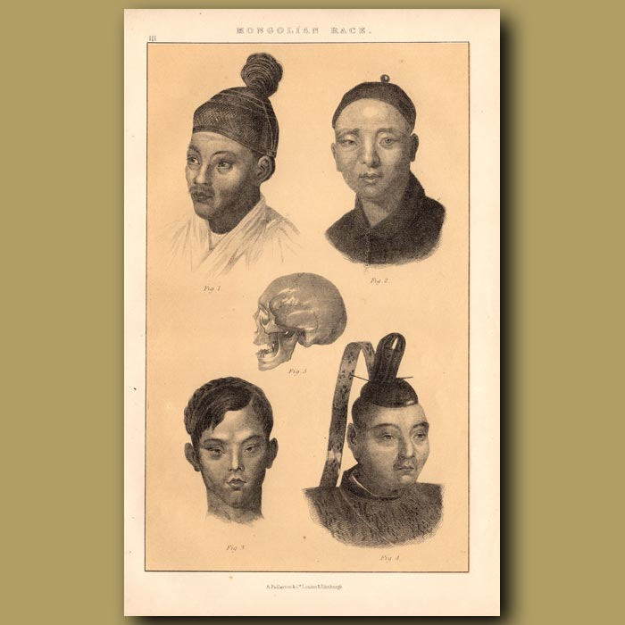 Antique print. Mongolian Race – South East Asia Branch, Chinese, Siamese and Japanese