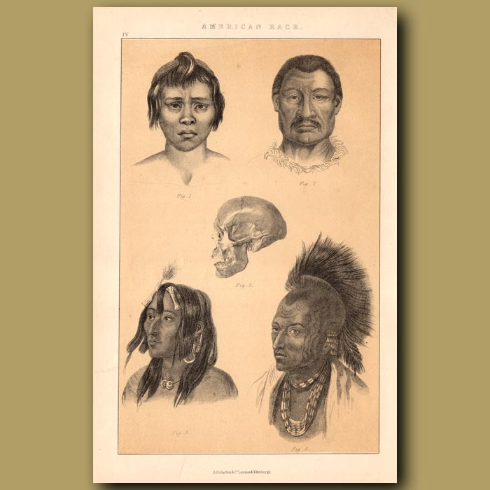Antique print. American Race – Native North Americans