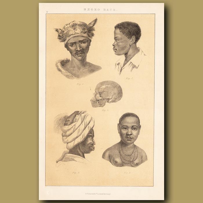 Antique print. Ethiopian Race – North African