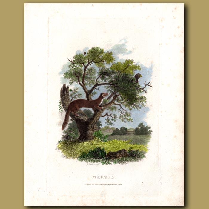 Antique print. Martin