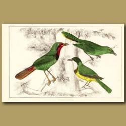 Shrike Birds