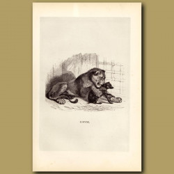Lion And Dog