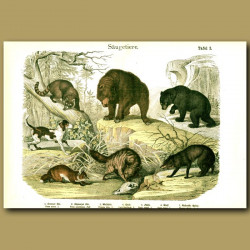 Arctic Fox, Fox, Wolves, Grizzly And Black Bears