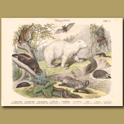 Polar Bear, Lemurs, Bats