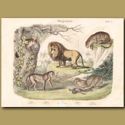 Lion, Leopard,Jaguar