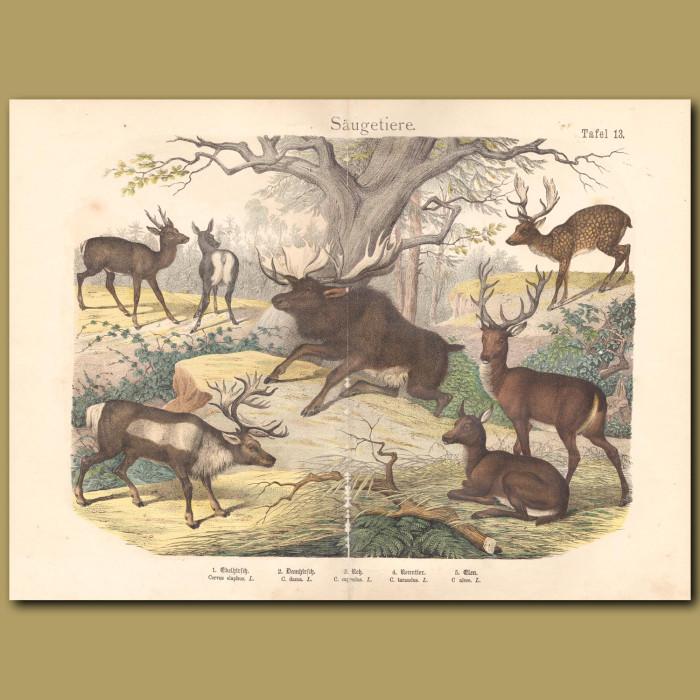 Antique print: Anteater, Sloth, Porcupine, Armadillo