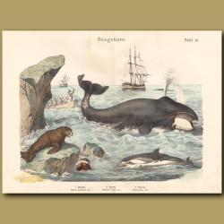 Bowhead (Sperm) Whale, Dolphin, Sea Lion