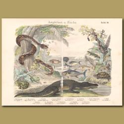 Boa, Coral Snake, Crocodile, Tortoise, Frog