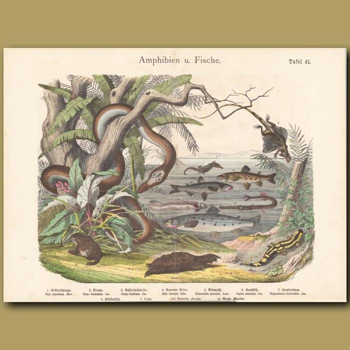 Antique print: Cobra, Turtle, Toads