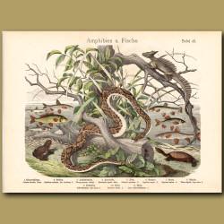 Timber Rattlesnake, Basilisk Lizard, Turtle