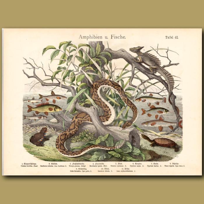 Antique print: Timber Rattlesnake, Basilisk Lizard, Turtle