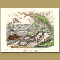 Iguana, Snake,Hawksbill Turtle