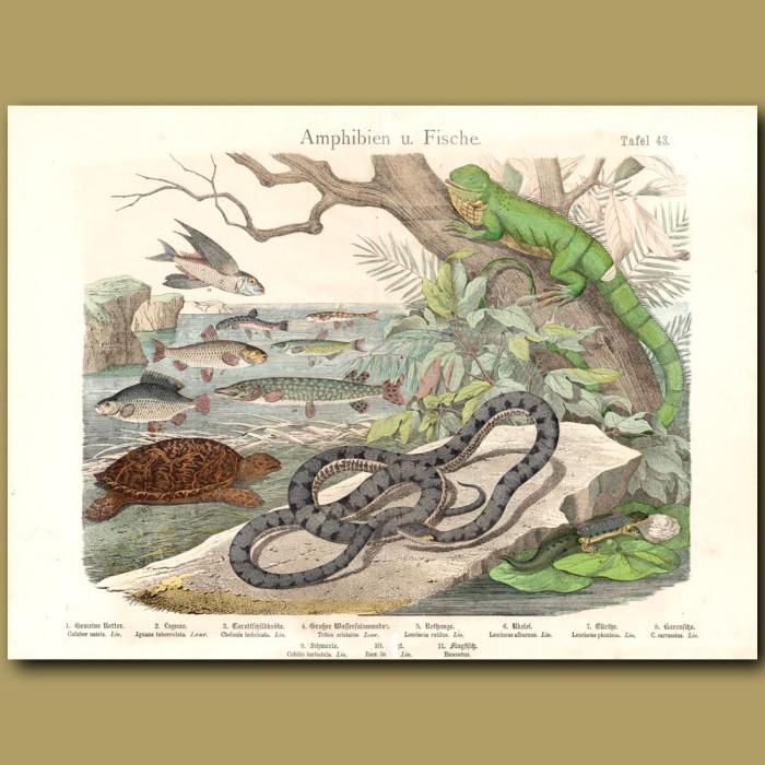 Antique print: Iguana, Snake,Hawksbill Turtle