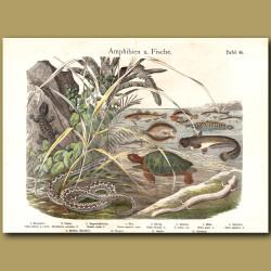 Gecko, Green Turtle, Salamander
