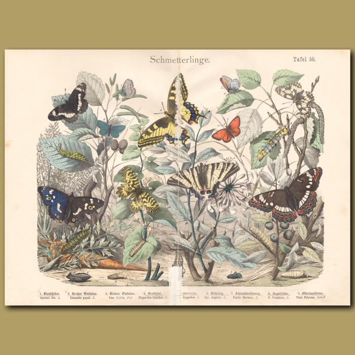 Antique print: Purple Emperor, White Admiral, Marbled White, Swallowtail