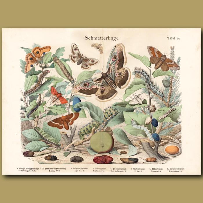Antique print: Peacock Moth, Emperor Moth, Saturn Moth