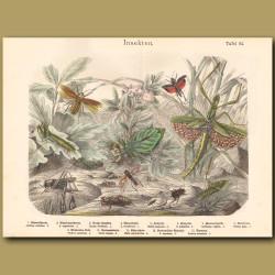 Stick Insect, Praying Mantis, Cricket, Locust
