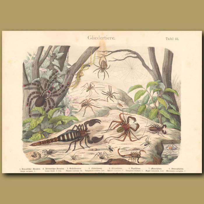 Antique print: Scorpion, Spider, Tarantula