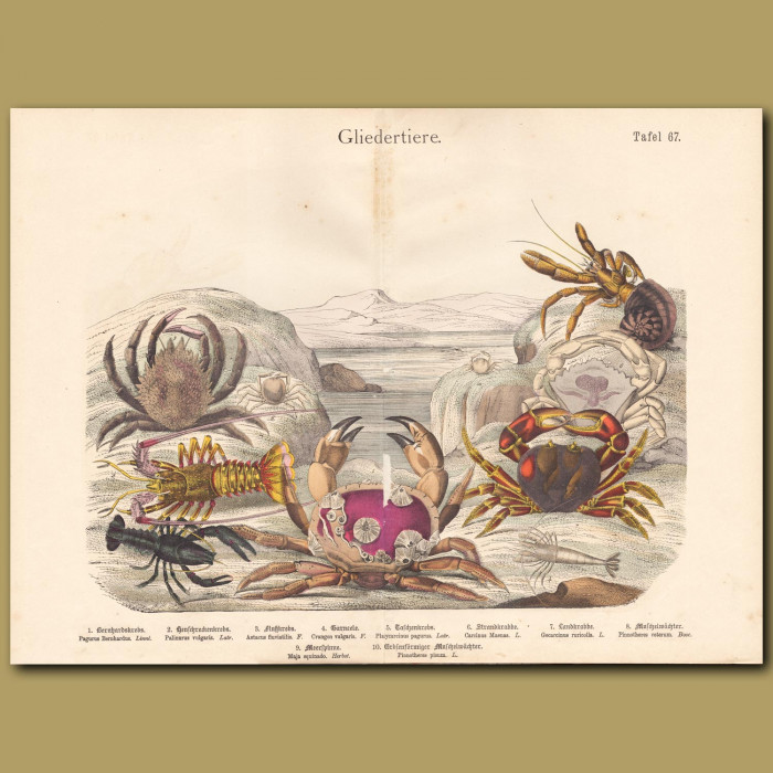 Antique print: Crabs and Lobsters