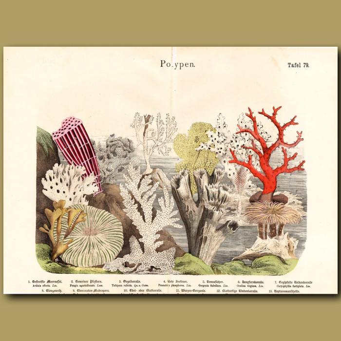Antique print: Venus Sea Fan, Fire Coral, Soft Coral