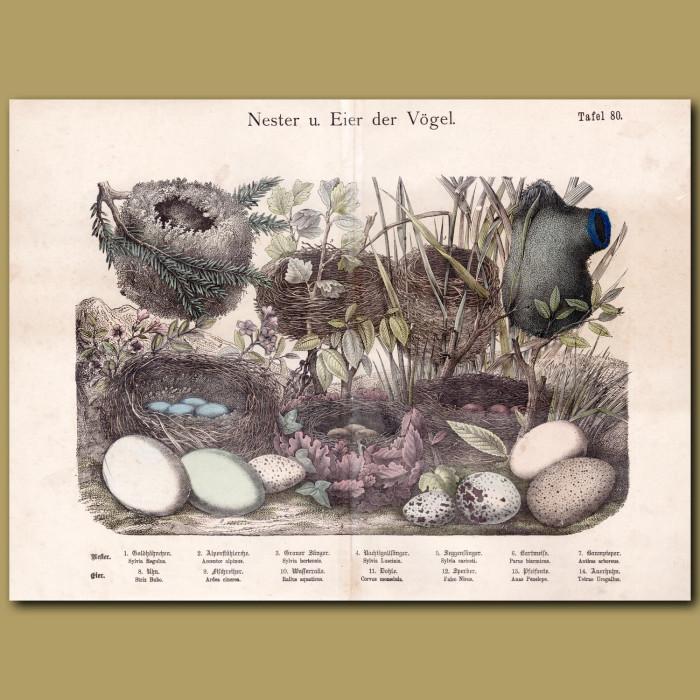 Antique print: Bird Nests and Eggs