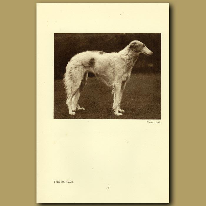 Antique print. The Borzoi