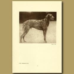 The Deerhound
