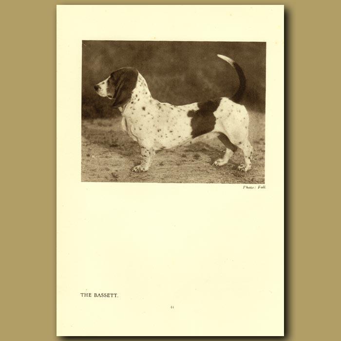 Antique print. The Bassett
