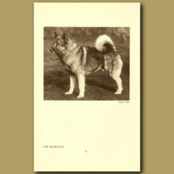 The Elkhound
