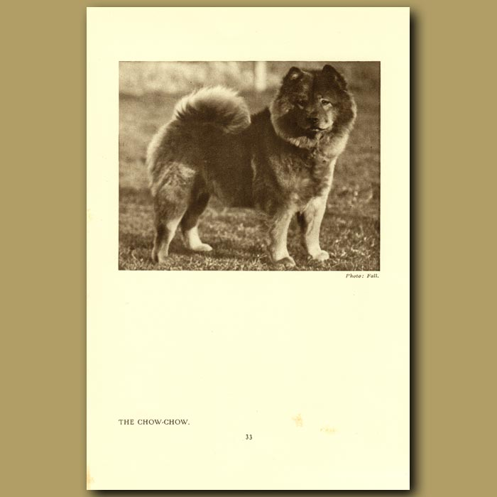 Antique print. The Chow-Chow